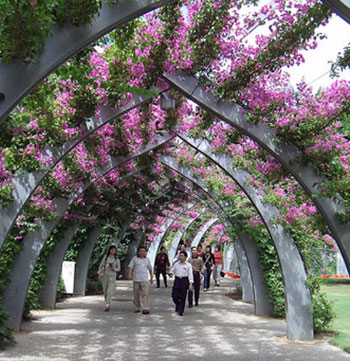 tourists walking down southbank walkway in Brisbane with purple plants during summertime