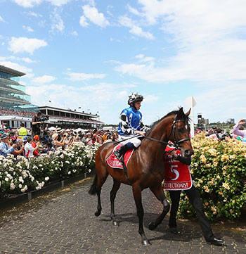 Horse and jockey passing crowd at Melbourne Cup at Flemington Racecourse